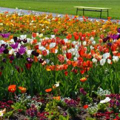 Zájezd: největší evropská výstava květin Tulln 2018