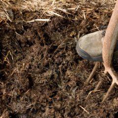 Prodej koňského hnoje